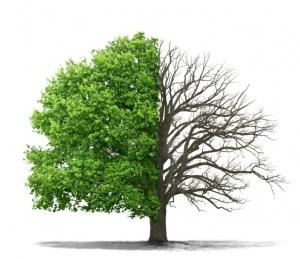 Kujme plány a plňme své cíle - Element Dřevo