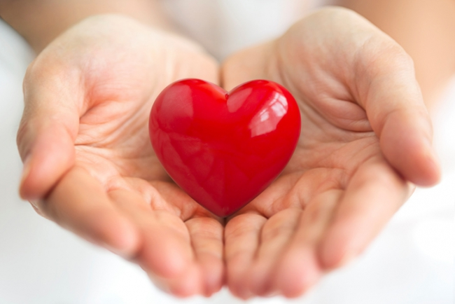 Srdce – císař lidského těla